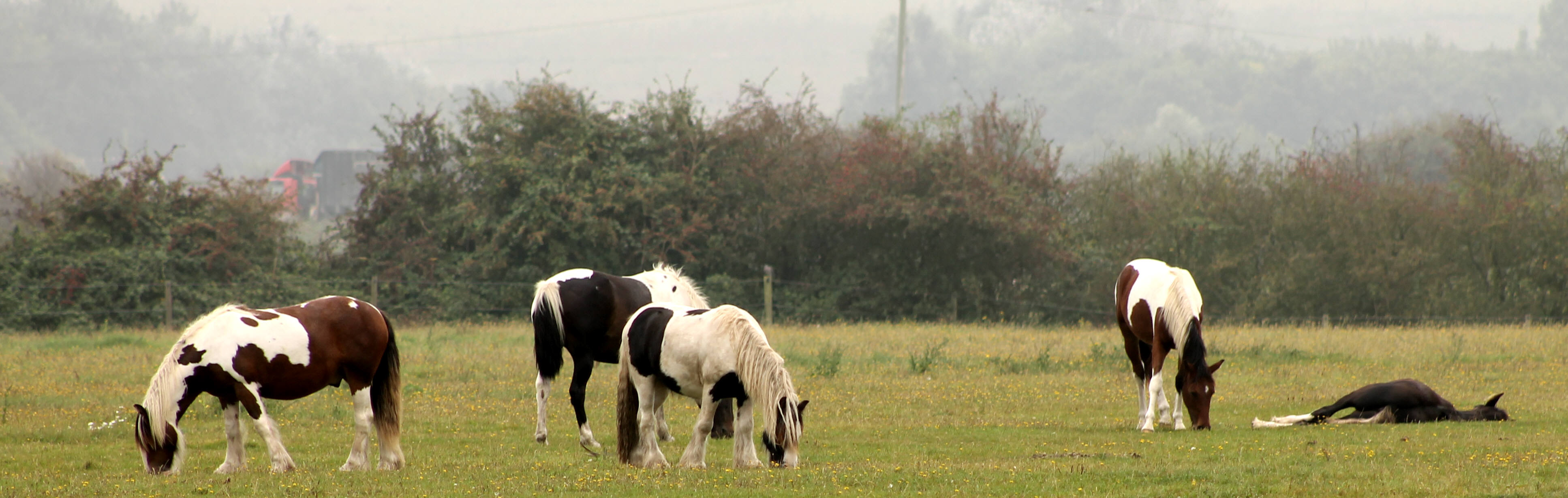 Jasper-with-the-Yearlings-Toni