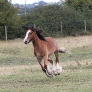 Horse - flint happy boy